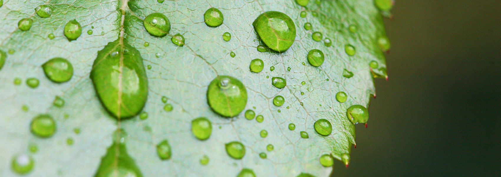 Water stewardship alliance